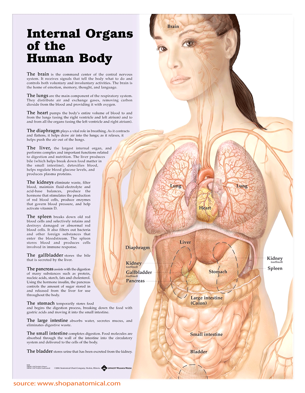 Emotions and Internal Organs